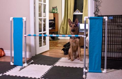 Dog Agility Wing Jump PVC
