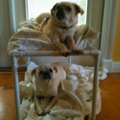 PVC Double Dog Bed